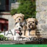 Adam, Suzie and Charlie - Regal Three