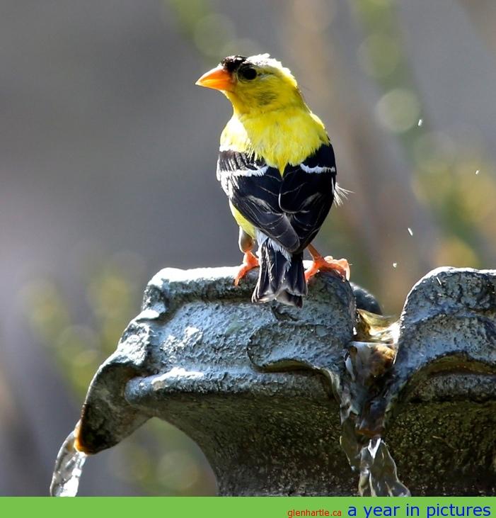 Chirp chirp chirp ~ thirsty?