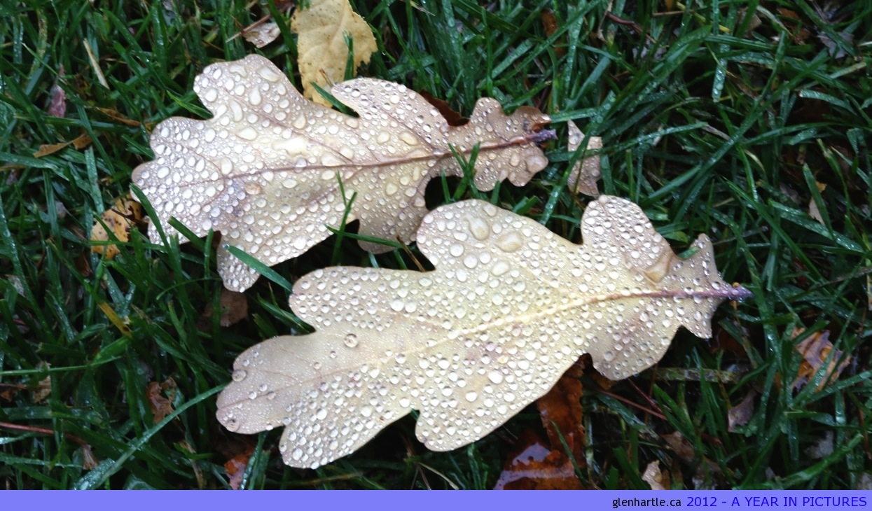 An oak leaf is never JUST an oak leaf