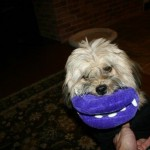 For Christmas, Charlie received a new toy in the shape of a mouth with fangs. Looks like a version of The Mask.