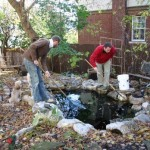 We have a pond. A small pond. And in that pond we had 5 coy. From Richard and Anthony after their visit this spring. Here we are trying to fish them out of the pond to put into an aquarium for the winter.