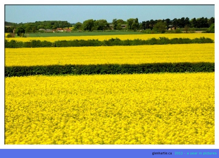 The countryside is beautiful and the canola [they still call it rapeseed here] creates a vibrant backdrop. And, NO Louis, we are not getting a sheep.
