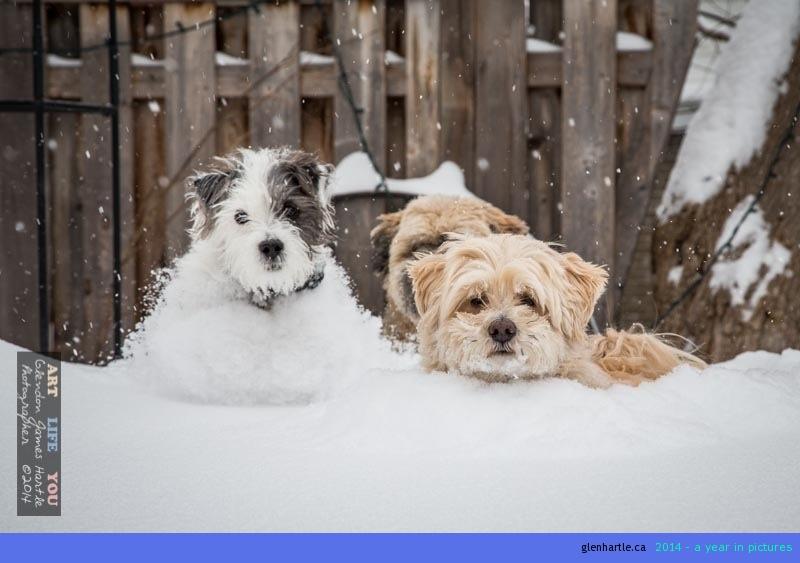 Puppies love snow