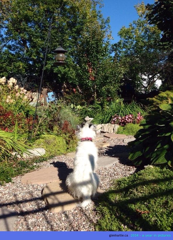 Suzie on patrol