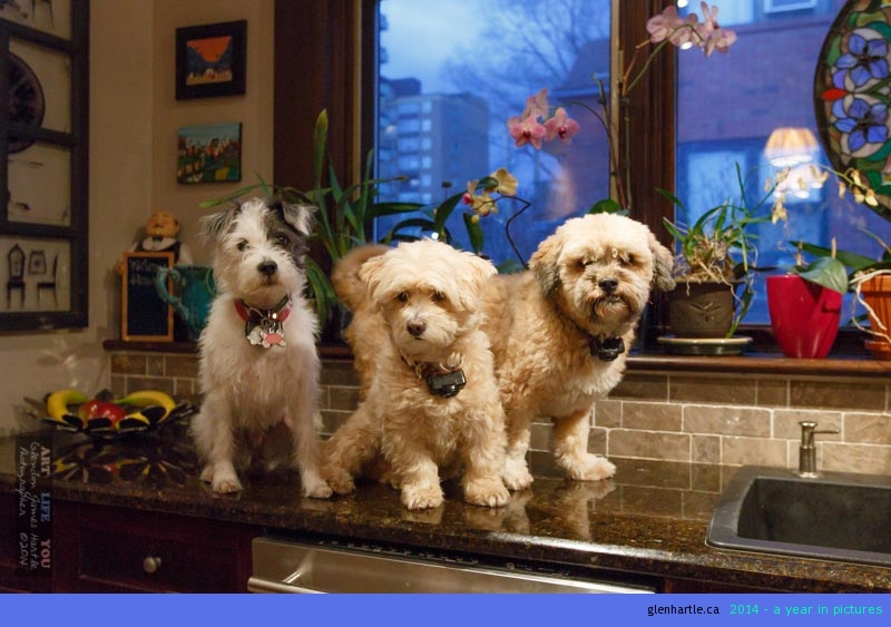 Shhhhh…..don't tell U-KNOW-WHO you're on the counter ~ who wants a treat?