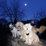 Kids and I, and the moon