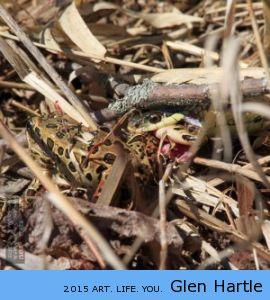 Paper, Scissors, Frog, Snake ~ snake wins!