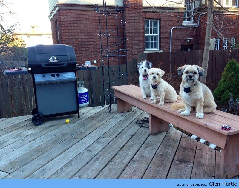 Three happy pups ~ it's BBQ season again!
