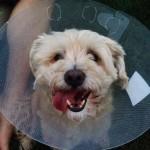 Hello cone dog :)