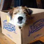 Max + Box = LOVE