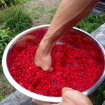 High bush cranberry violence ~ a prelude to sweetness