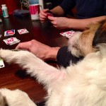 Max ~the game cuddler