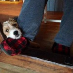 What contrition looks like ~ I didn't mean to chew your slipper papa...