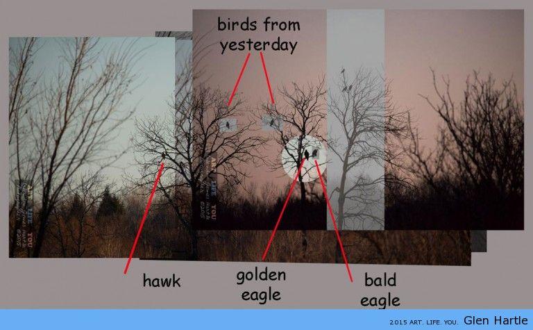 Size comparison ~ hawk, eagle, raven