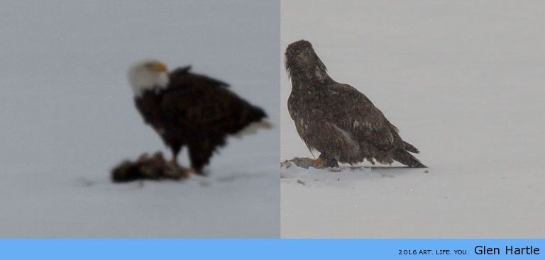 A tale of two eagles…