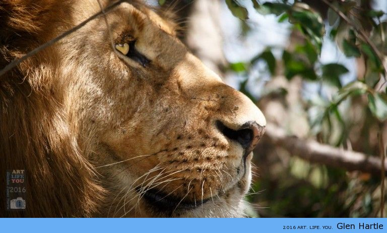 Wildlife Day 2016 ~ lend your voice to the voiceless