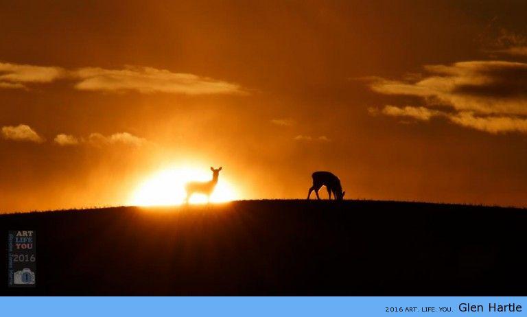 The deer at dusk.