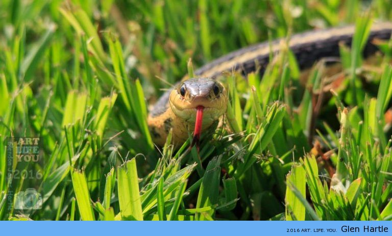 Quite literally: a snake in the grass.