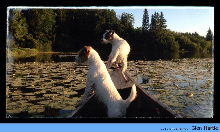 Terrier heaven :)