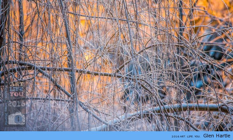 Morning glow through the willow ~ crisp winter delight.