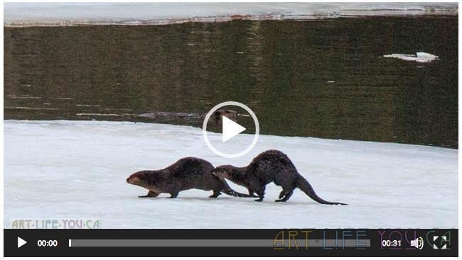 Today's simple pleasure? Otters :)