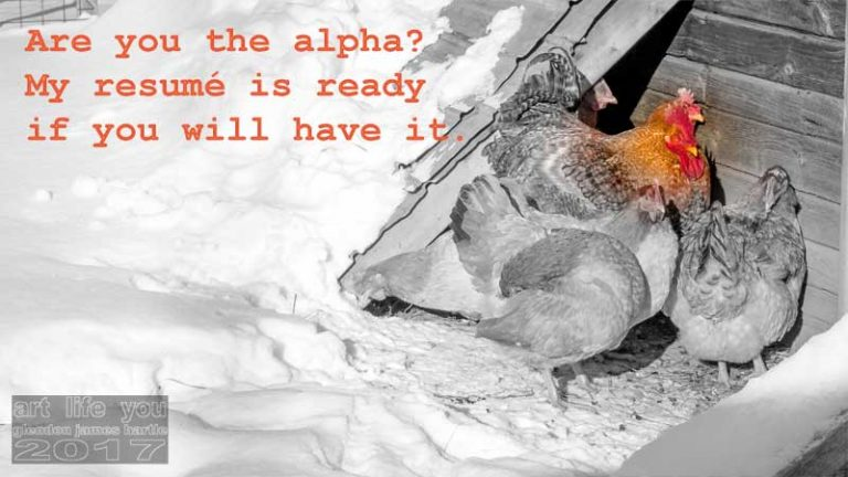 Are you the alpha?
