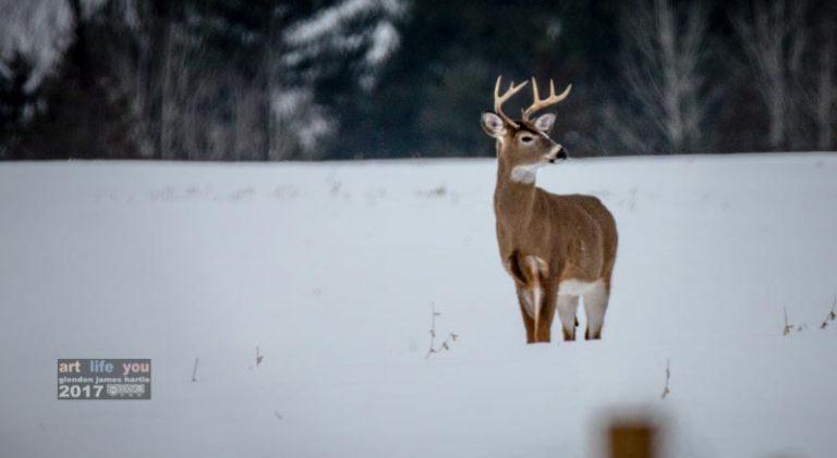 Wayward reindeer by the front door — pssssssst … you're a little early!