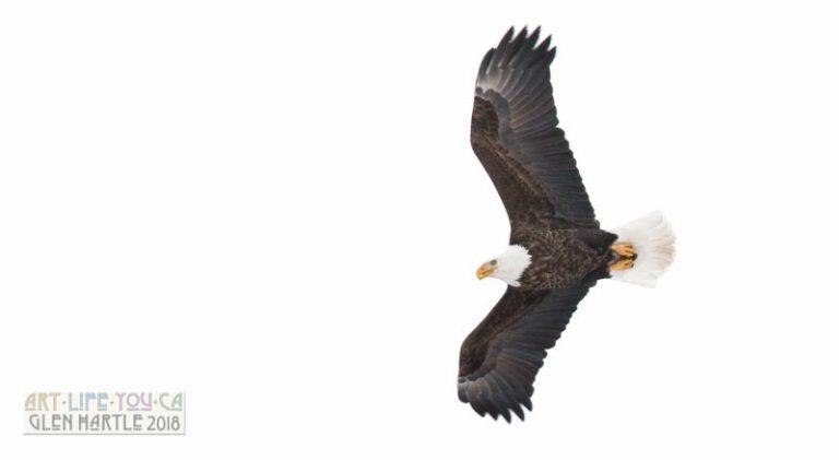 More eagle pics :)