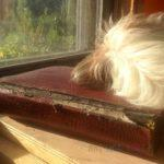 """Max has a very pragmatic definition of a """"good book"""" ..."""