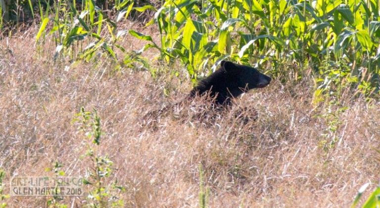 Start of updates from Bear Central