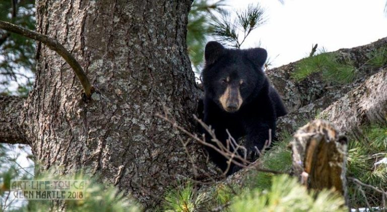 Update from Bear Central