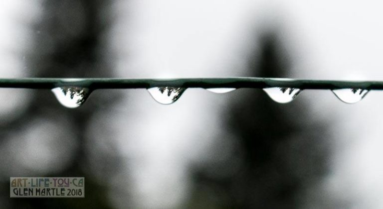 This morning's simple joy? Marvelling at how the raindrops invert & flip the trees.