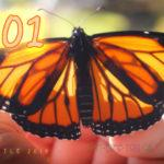 Monarch Butterfly #101 Arrived Today :)