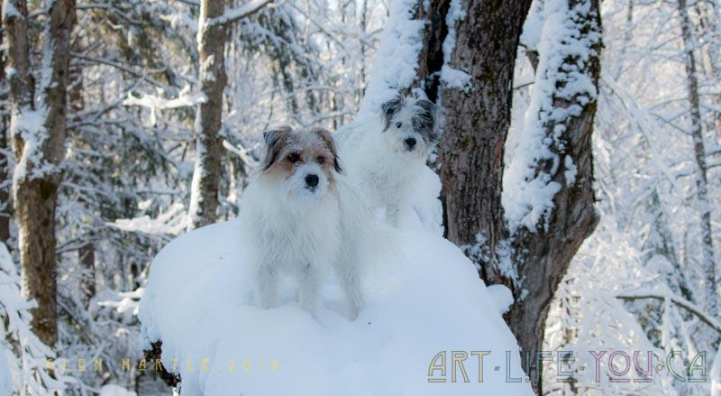 My denizens of the forest ~ also impressed by the clinging snow