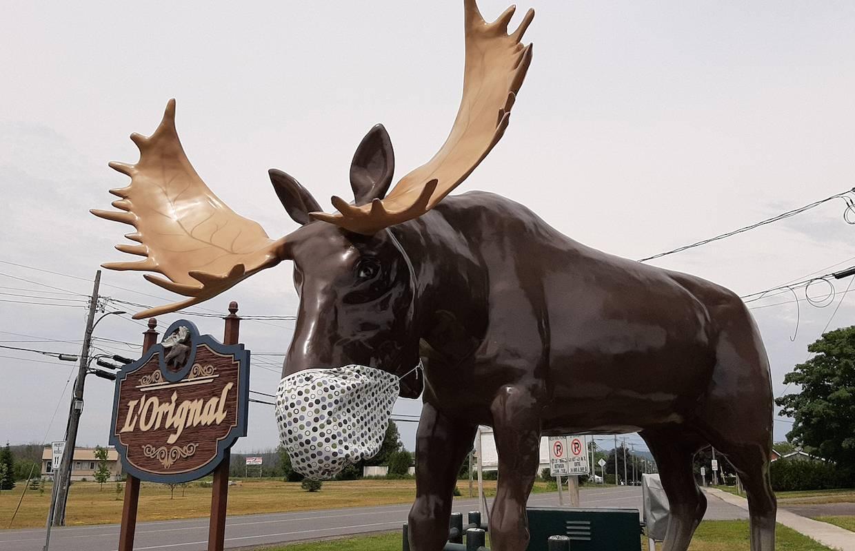 Covid-moose