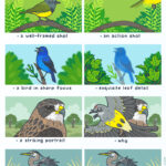 LOL - a guide to bird photography