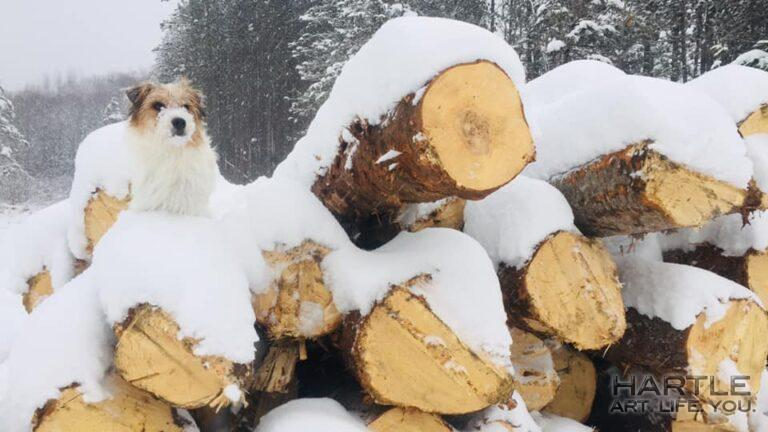 The log driver learns to step lightly …