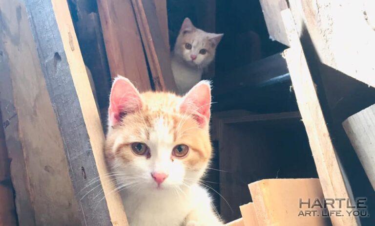 Meet Mister Peeper and Little Bill