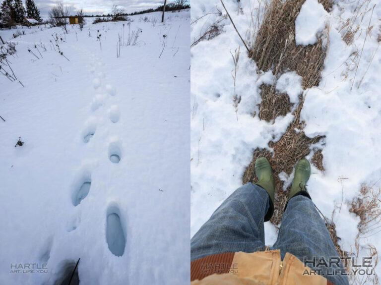 On Tuesday morning, I had to empty the snow out of my boots … today, I could likely go in slippers: