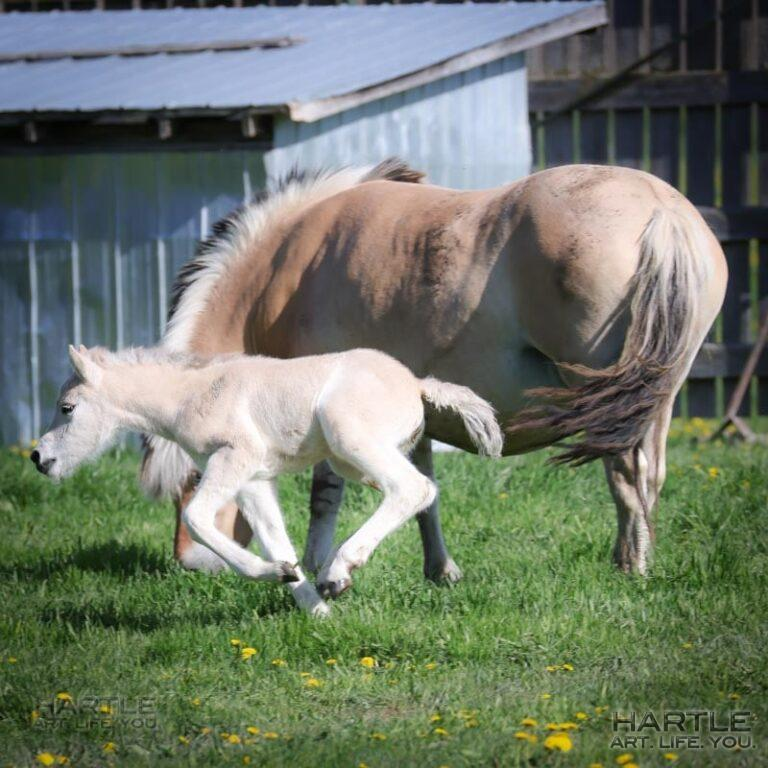 This foal was born yesterday at ron' farm (i.e. where we have the market) and is a delight to watch! He runs around his momma non-stop!