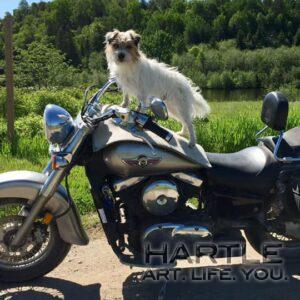 Sweet ride, Max … and nice rug