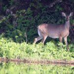 Pick any spot you like - Bambi should love it when he arrives