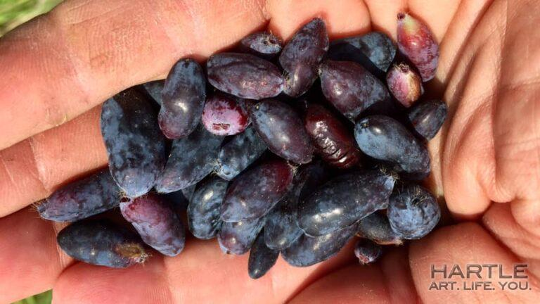 Why it's important to clean the berries before using … see it?