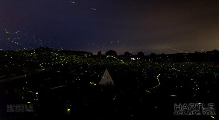 The fireflies are mesmerizing tonight