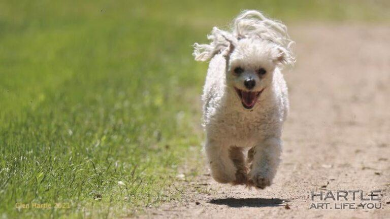 Meet Hover-Dog