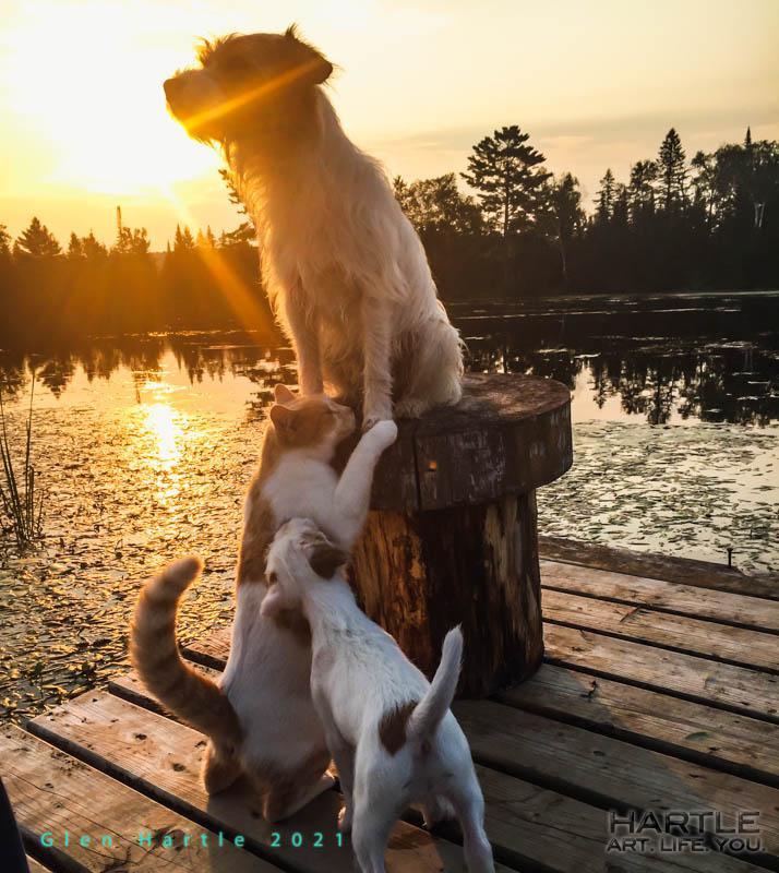 Dock rats at dawn