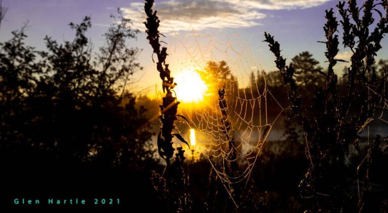 Cobwebs ~ nature's brush