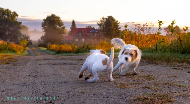 Evasive Manoeuvres at Dawn ~ Shayree can be a bit much at times …
